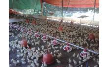 Plato comedero Aves Lider Plus Material Granjas Avicolas