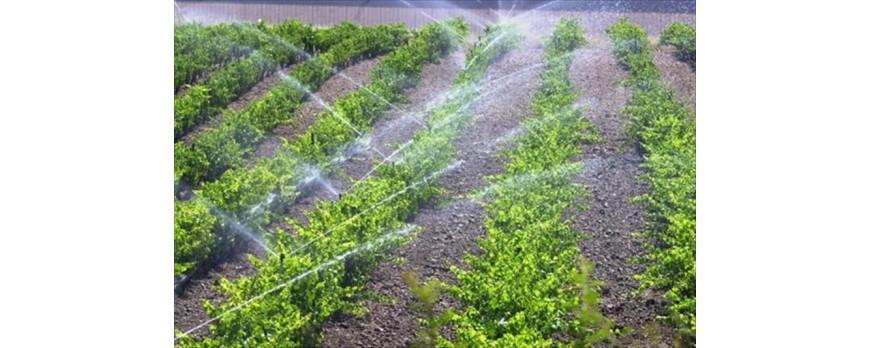 Solicitan un seguro agrario para la sequía que cubra las pérdidas de regadío