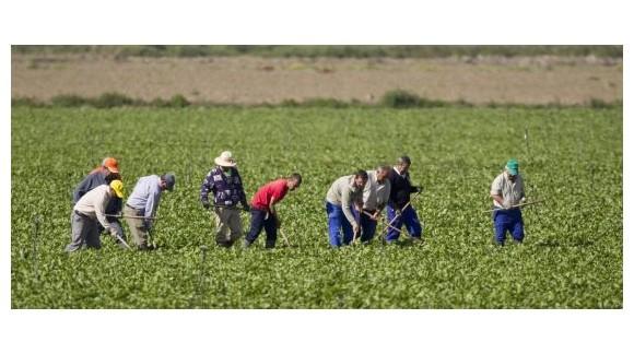 El paro sube en el sector agrario mientras en toda España tiene una fuerte bajada