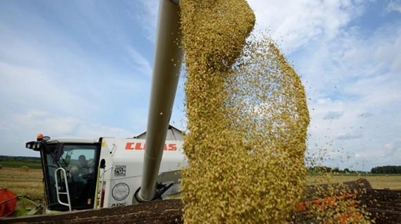 Los precios de los cereales en el mercado mayorista sin apenas variaciones