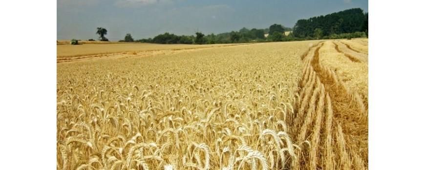 La producción mundial de cereales caerá un 1,69% en la próxima campaña