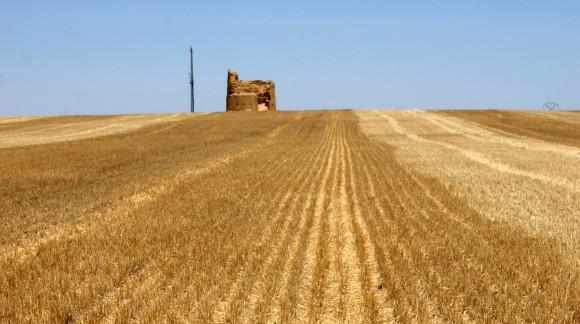 Previsión de los precios de los cereales