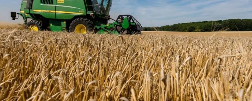 Precios de los cereales a la baja a comienzos de 2018