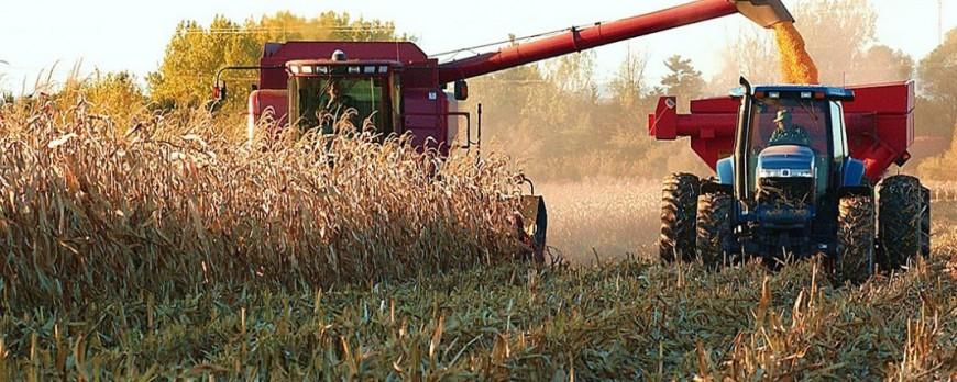 Los precios medios de los cereales al alza salvo el trigo blando