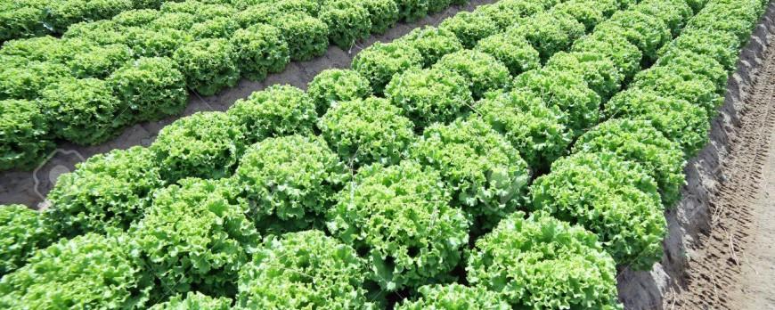 El BOE publica condiciones para suscribir líneas de seguros a cultivos hortícolas
