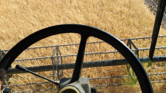Tras un pequeño repunte, el precio de los cereales vuelve a bajar