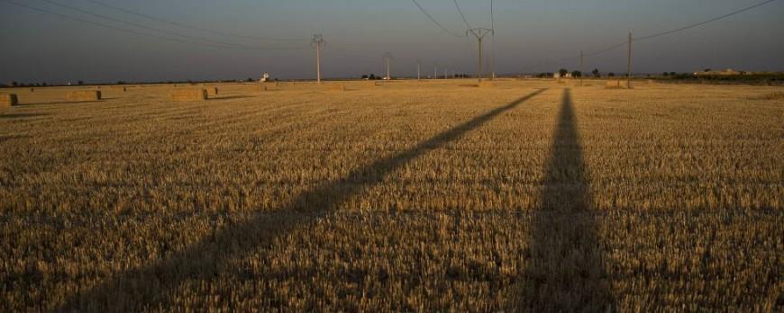 Se Prevé una bajada de cultivos de cereales por la sequía y los precios