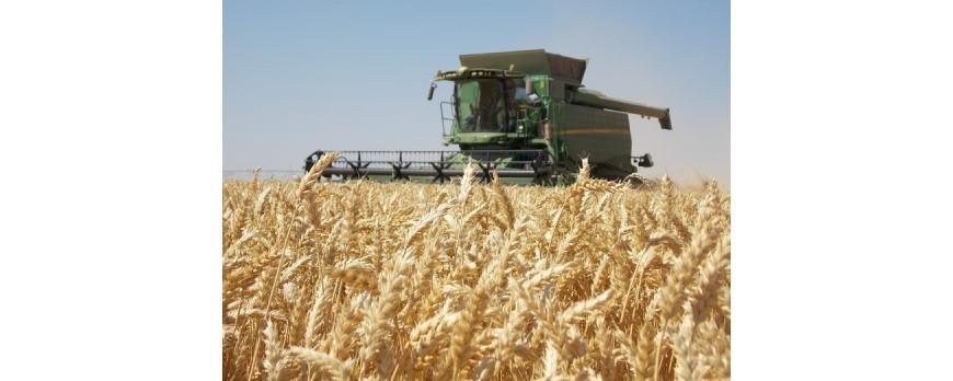 El precio de cereales confirman lo peor, están a la baja y descenso en todas categorías