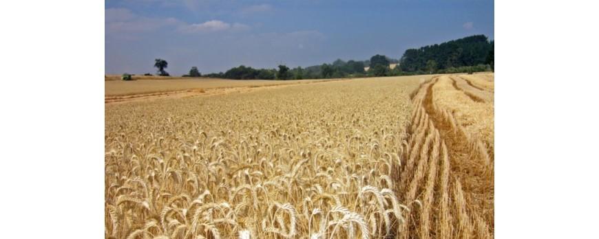 El mercado de los cereales congelado hasta recibir noticias internacionales