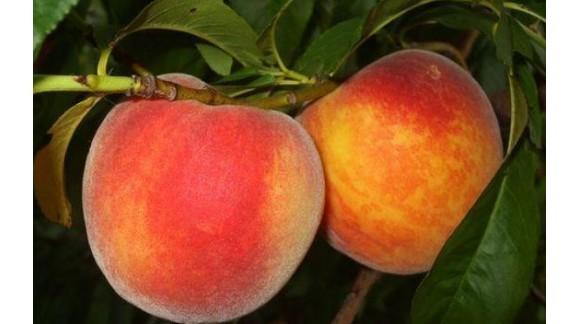 Murcia también considera lamentable la campaña de fruta de este año