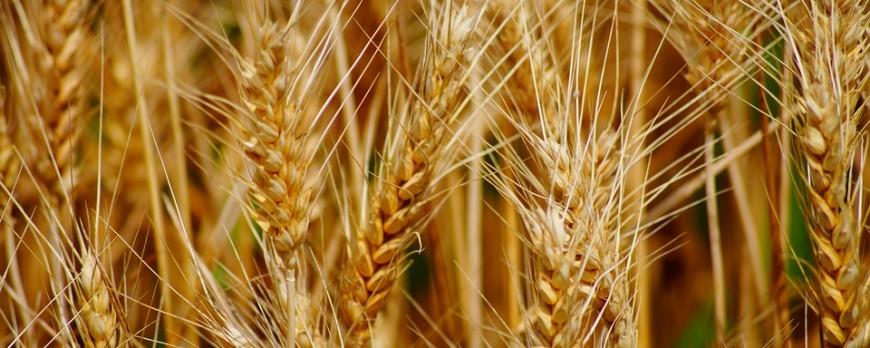 Las especulaciones de los mercados mayoristas fijan unos precios de cereales muy variables