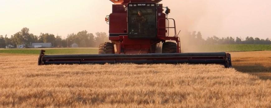 El precio del trigo sigue descendiendo como las últimas semanas