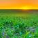Agroiberica ofrece semanalmente los precios de la lonja del ebro, lonja de lerida y binefar [05-03-2018]