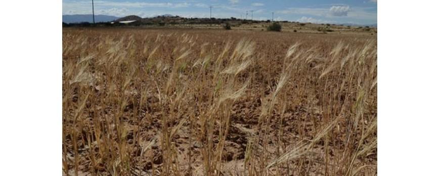 ASAJA, UPA y UCCL se han reunido esta semana para reivindicar un apoyo real a los afectados por la sequía
