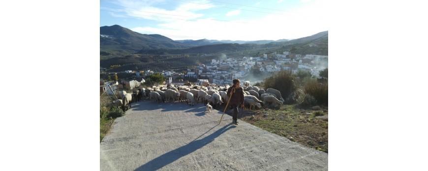 La revista Desarrollo Rural y Sostenible habla sobre el papel de la mujer en el futuro del medio Rural