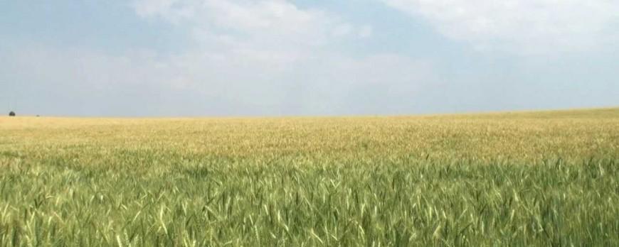 Agroiberica ofrece el precio de la lonja del ebro y lerida [12-03-2018]
