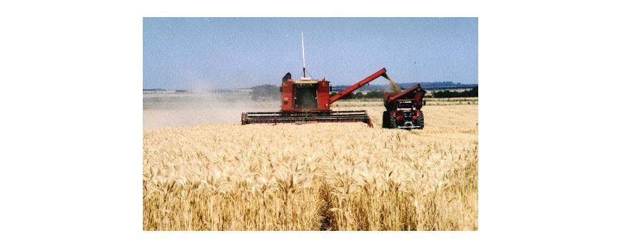 Se prevé un descenso en la producción mundial de cereales del 1,32 por ciento