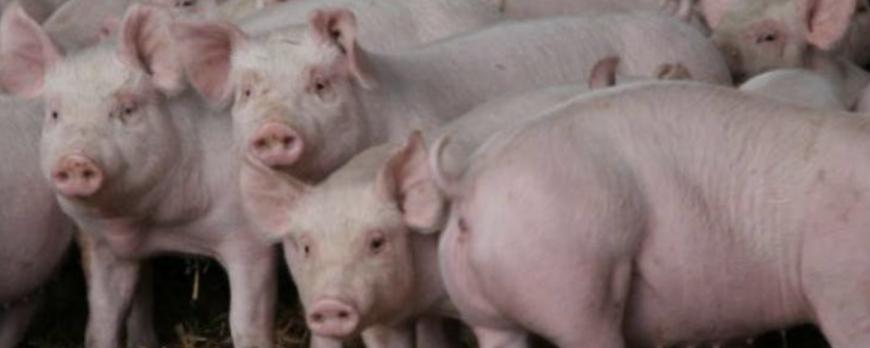 Agroiberica ofrece un día más las cotizaciones de la lonja del ebro, lonja de lerida [19-03-2018]