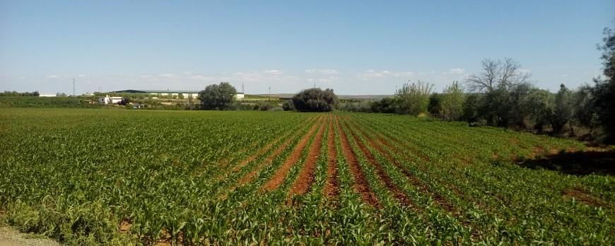 Ya solo hay subidas de precio del maíz, el resto con descensos