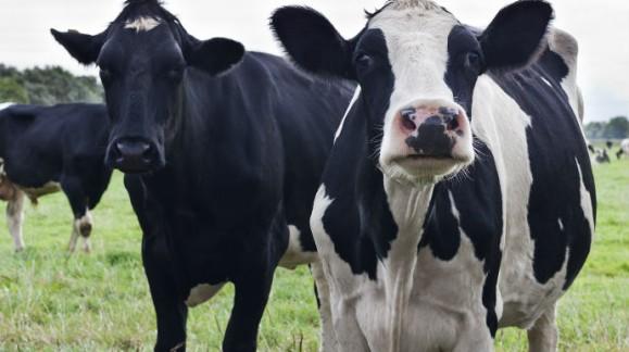 El Ministerio de Agricultura reduce el IRPF a los productores de cereales, fruta de hueso y ganaderos