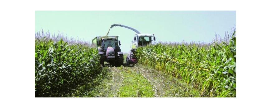 Sube el precio del maíz y bajan los precios del trigo y cebada en la última semana