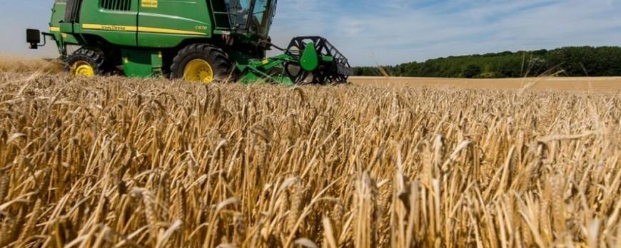 Continúa la bajada de precios de los cereales a excepción del Maíz