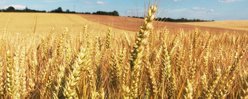 Agroiberica le ofrece los precios de la lonja del ebro, lerida y binefar [21-05-2018]