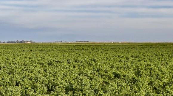 Conoce otra semana más los precios de la lonja del Ebro y Lerida