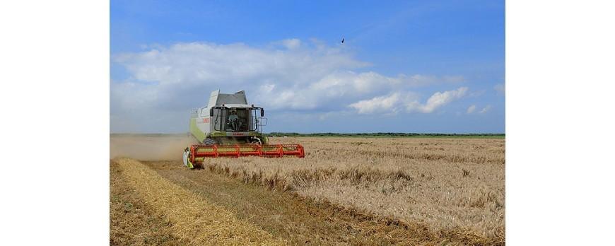 El precio de los cereales continúa en descenso, aun con el enfado del sector del cereal