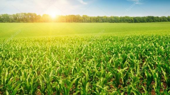 Precio de la lonja del Ebro y Lerida cada Semana en Agroiberica