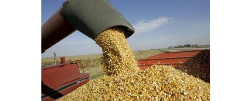 El consumidor llega a pagar más de un 800% más de lo que gana un agricultor por los cereales