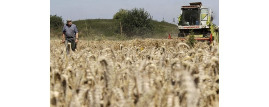 Exigen una subida de precios en los cereales al igual que sucede a nivel internacional