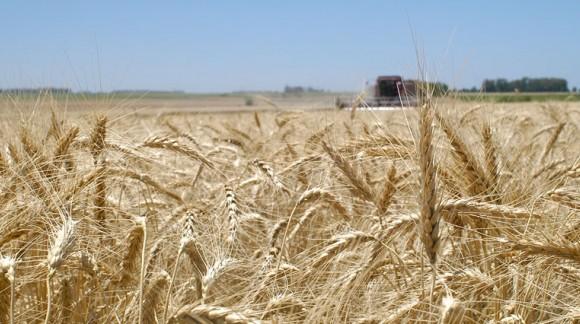 Consulta el Precio de la Lonja del Ebro en Agroiberica