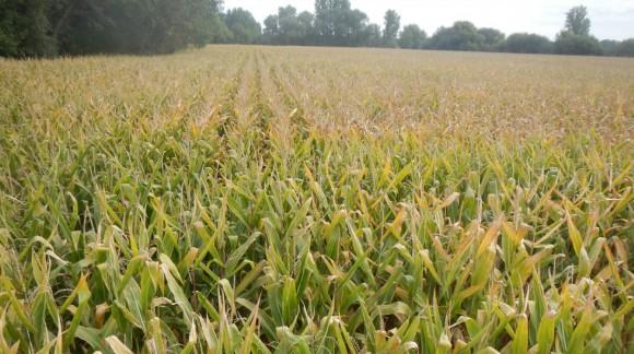 La Lista con los Precios de la lonja del Ebro, como cada Semana en Agroiberica