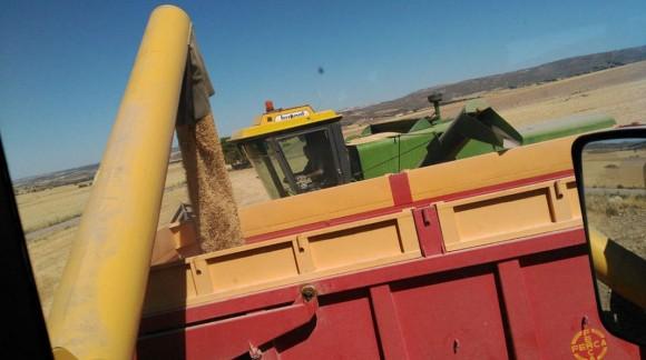 Nuevo repunte en el precio de los cereales, Otra Semana Más