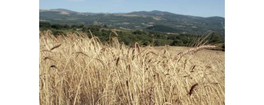 Hoy puedes consultar los precios de la lonja del Ebro y Lerida en Agroiberica