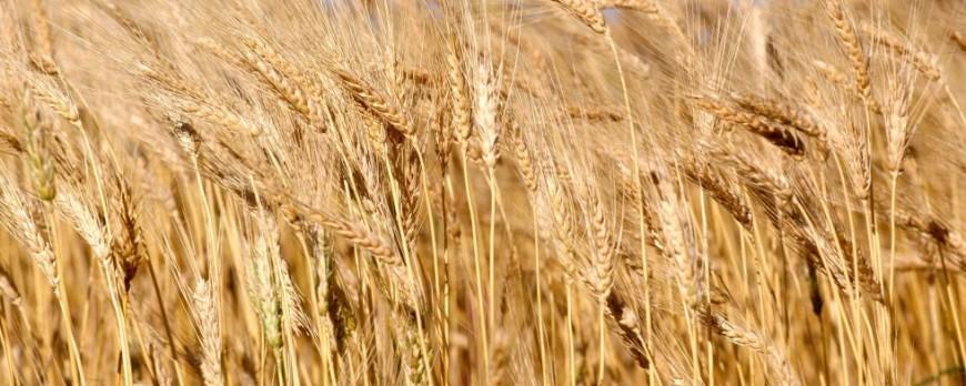 Consulta durante el día de HOY el precio de la lonja del Ebro y Lerida GRATIS en Agroiberica