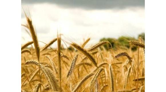 Recomiendan no precipitarse a la hora de vender los cereales para no bajar los precios