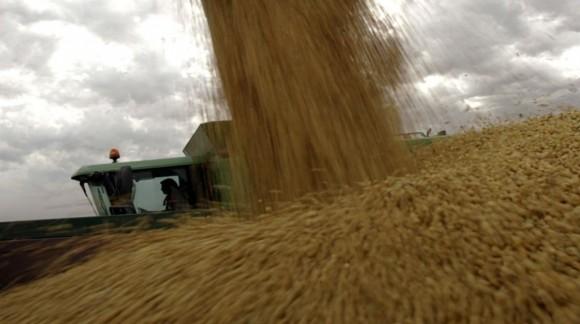 Los mercados mayoristas bajan el precio de los cereales, rompiendo la tendencia del verano