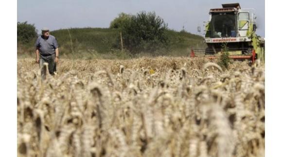 Precio de la Lonja de Ebro, Lerida y Binefar, como cada Semana en Agroiberica