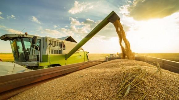 Los mercados mayoristas siguen bajando los precios de los cereales, otra semana más