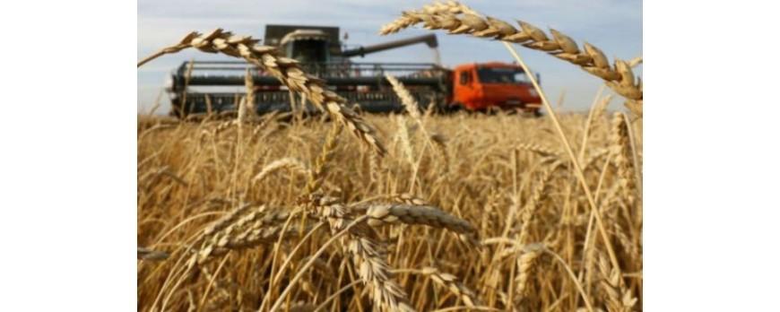 El precio de los cereales no levanta cabeza, nuevamente con bajadas