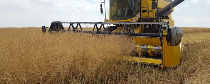 Continúan la subida en los precios del trigo, cebada y avena