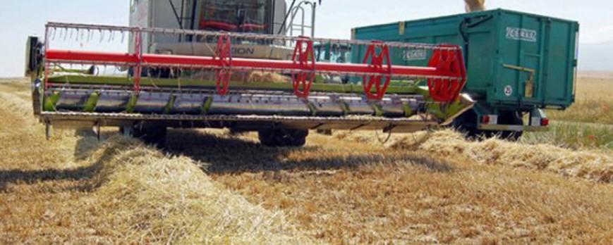 La cebada lleva ya 8 euros de subida y mantiene los precios al alza de los cereales