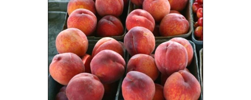 Mapama ve difícil pero no imposible que la CE amplíe el cupo de retirada de fruta en España