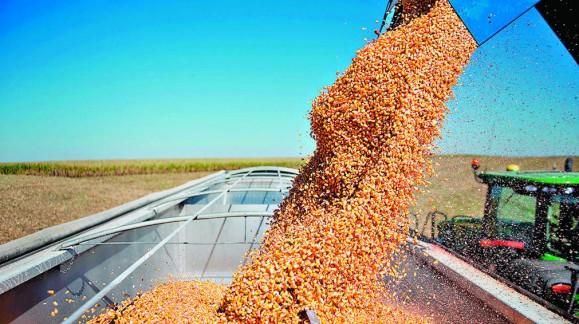 La cebada modera ya sus precios, pero el resto de cereales con subidas