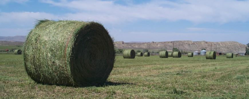 Las exportaciones suben el precio de la alfalfa hasta 12 euros