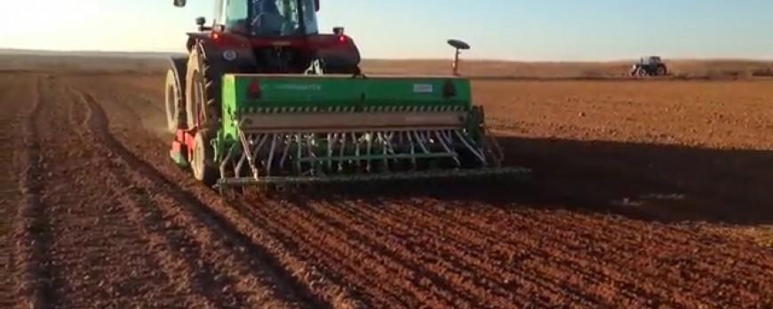 Caída de la superficie de siembra de trigo para ser sustituida por la cebada