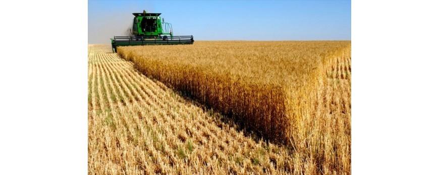 La producción mundial de cereales bajará un 2,49% en la campaña 17-18 pero puede ser positivo para España