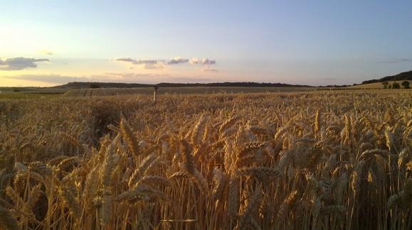 Consulta los precios esta Semana de la lonja del Ebro en Agroiberica